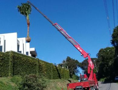 Içamento de árvores / Paisagismo